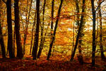 Autumn Magic II