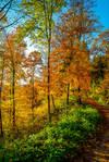Autumn remembrance IV