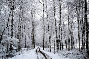 Snowland IV