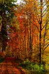 Autumn remembrance V