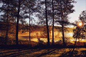 Golden Morning by Aenea-Jones