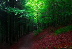 Deep in the Woods II by Aenea-Jones