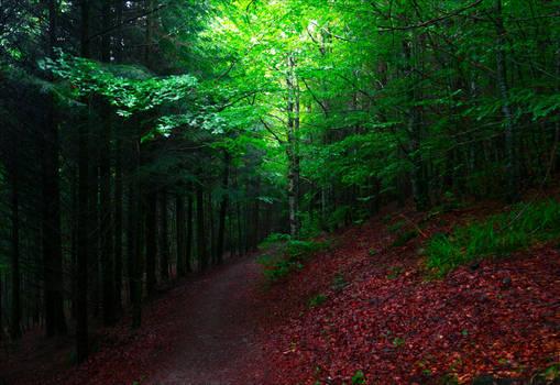 Deep in the Woods II