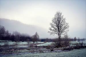 Bleak December by Coccineus