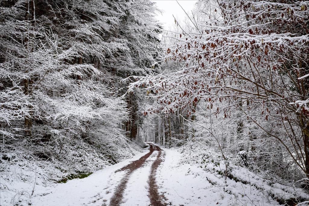 Snowland V by Aenea-Jones
