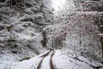 Snowland V