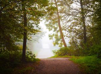 Foggy Morning VI by Aenea-Jones