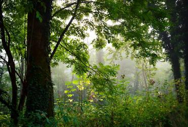 Foggy Morning VII