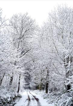 Snowland VI