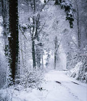 Eternal Winter by Coccineus