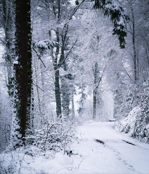 Eternal Winter by Aenea-Jones