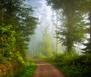 Foggy Morning VIII by Aenea-Jones