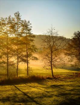 Golden Morning III