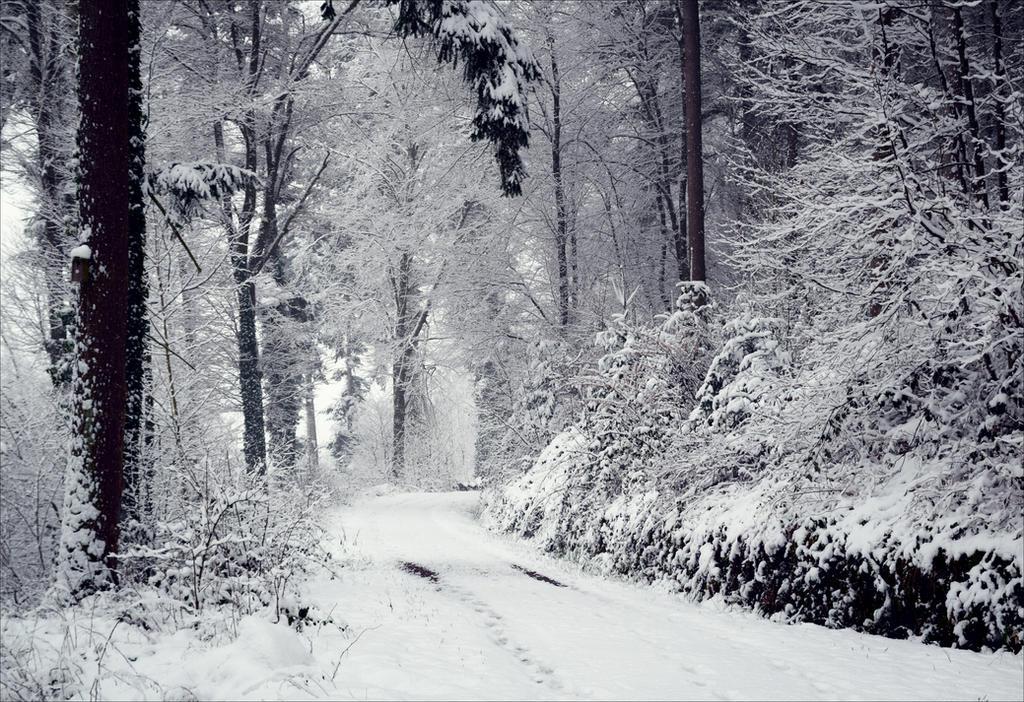 Eternal Winter II by Aenea-Jones