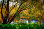 River flowing, nostalgia growing V by Coccineus