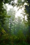 Foggy Morning IX
