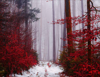 Entrance to the Bloodred Forest by Coccineus