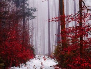 Entrance to the Bloodred Forest