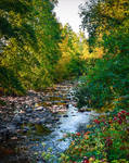 Where the River flows V
