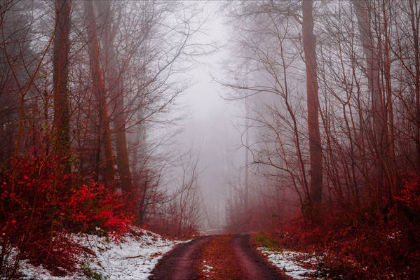 Bloodred Forest VIII