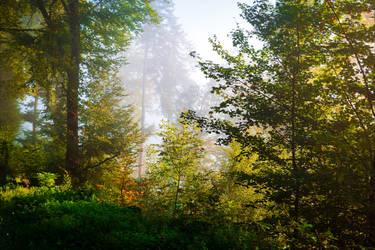 Foggy Morning XI