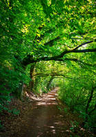 Overhanging Trees II by Aenea-Jones