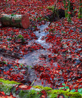 And Within Red. A River. III by Coccineus