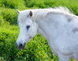 White Glint by Coccineus