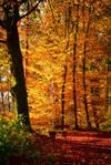 Autumn remembrance VII