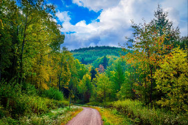 Country Trail by Coccineus
