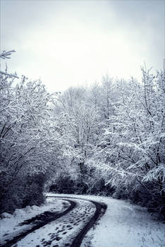 The Dark Cold of Winter