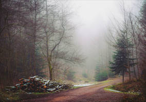 Lost in the Woods IV by Coccineus