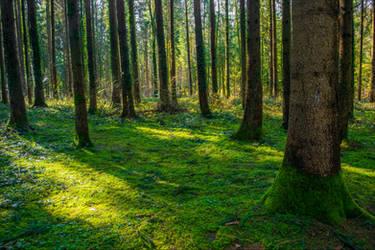 Green Carpet by Aenea-Jones