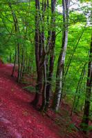 Deep in the Woods VI by Aenea-Jones
