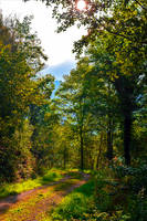 Forest Trail III by Coccineus