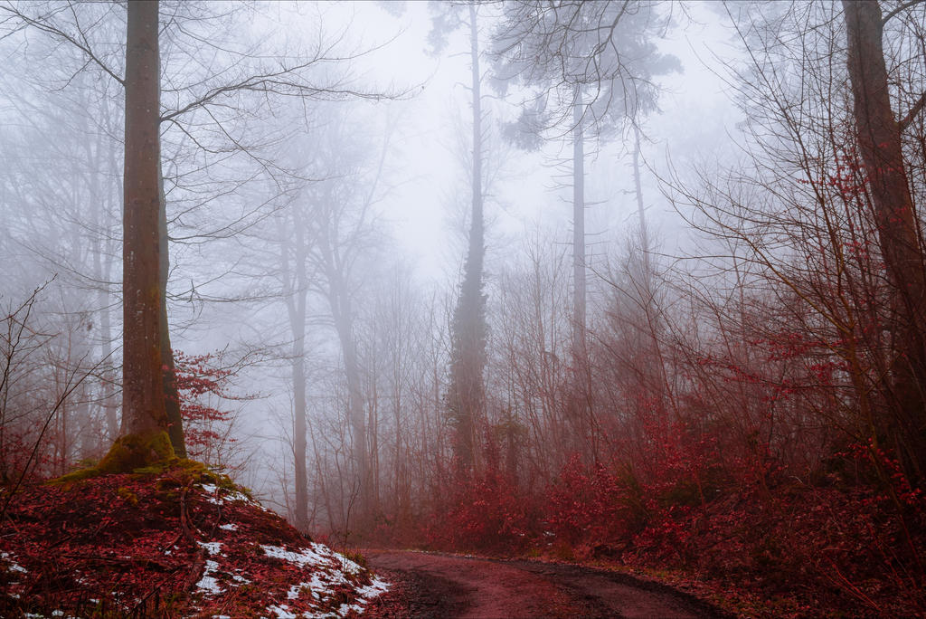 Bloodred Forest X by Coccineus