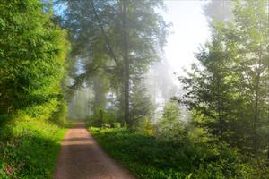 Foggy Morning XVI by Coccineus