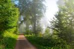 Foggy Morning XVI