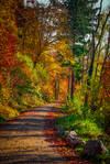 Autumn remembrance VIII