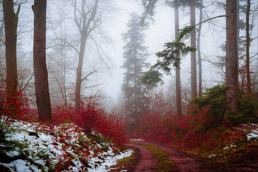 Bloodred Path