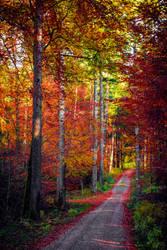 Autumn Colors III by Aenea-Jones