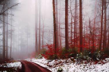 Bloodred Path II