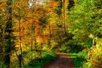 Autumn remembrance XI