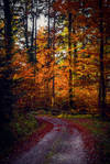 Autumn Colors IV