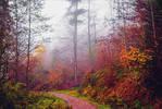 Last Breath of Autumn II