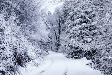 Eternal Winter III by Aenea-Jones