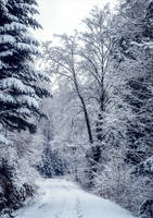 Eternal Winter V by Coccineus