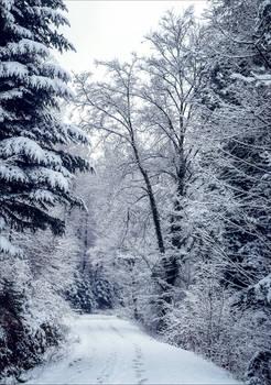 Eternal Winter V