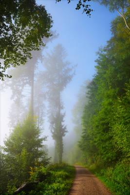 Foggy Morning XX