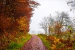 Last Breath of Autumn VI